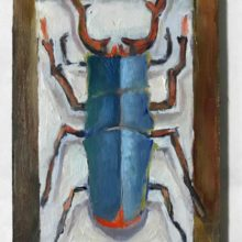 5.insect klein formaat